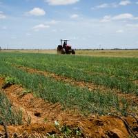 MP que repactua dívidas de agricultores inclui 10 mil irrigantes de projetos da Codevasf