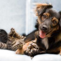 Cuidados que devemos tomar com os animais de estimação no período de festas e férias